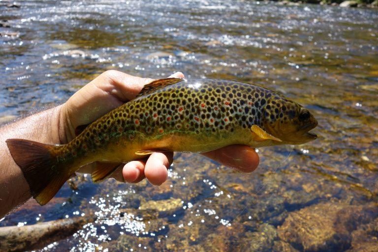 Peche truite rivière seche nymph leurres